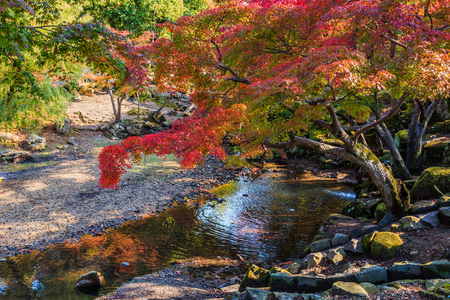 Autumn Laves at Hiroshima Central Park in Japan Stock Photo - 24802715
