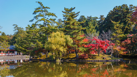 Autumn Laves in a Garden in front of Todaiji Temple in Nara Stock Photo - 24803611