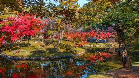Autumn Laves in a Garden in front of Todaiji Temple in Nara Stock Photo - 24870729