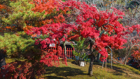 todaiji: Autumn Laves in a Garden in front of Todaiji Temple in Nara Stock Photo