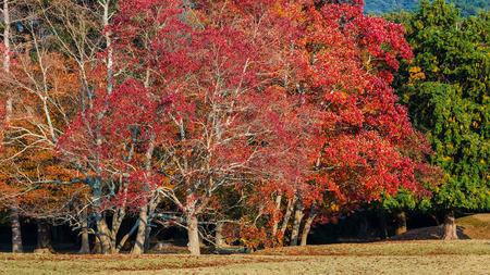 nara park: Autumn Laves at Nara Park in Nara Stock Photo
