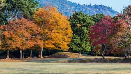 Autumn Laves at Nara Park in Nara Stock Photo - 25080544