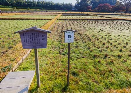 okayama: Seiden  Rice Fields  at Koraku-en garden in Okayama