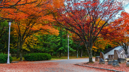 Osaka Castle garden in autumn in Japan photo