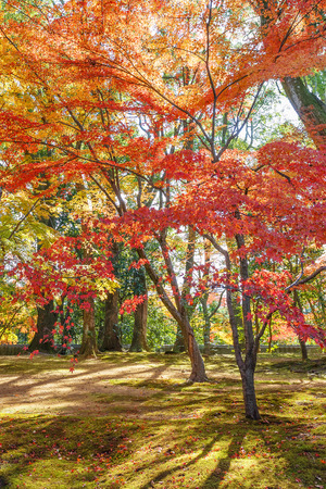Red Maple leaves in a garden in autumn Stock Photo - 26807903
