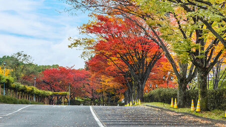 momiji: Autumn leaves in a parking lot