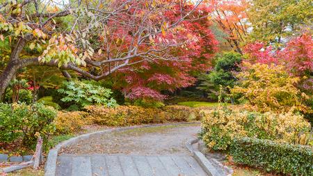 Autumn Leaves Garden Stock Photo - 27503712