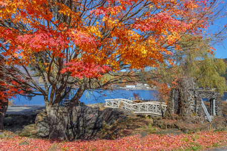 Red Maple leaves in autumn at Kawaguchiko Lake photo