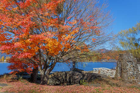 kawaguchi ko: Red Maple leaves in autumn at Kawaguchiko Lake Stock Photo
