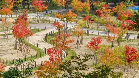 osakajo: Osaka Castle Park in Osaka, Japan