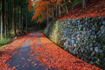 koyo: The Road to Taiyuinbyo Shrine and Futarasan-jinja Shrine in Nikko, Tochigi, Japan