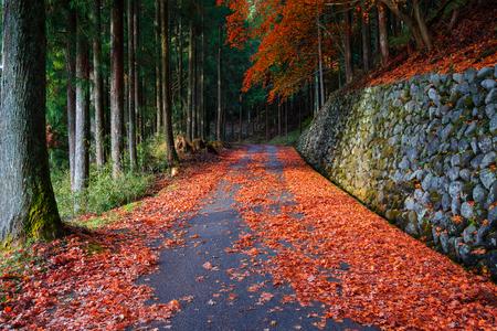 momiji: The Road to Taiyuinbyo Shrine and Futarasan-jinja Shrine in Nikko, Tochigi, Japan