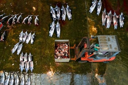 auctions: WAKAYAMA, JAPAN - NOVEMBER 20, 2015:  Katsuura Nigiwai Market is the biggest fish market in Wakayama prefecture, Maguro tuna auctions held every morning started at 7.30 daily