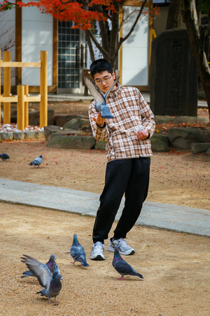 matsumoto: MATSUMOTO, JAPAN - NOVEMBER 21, 2015: Unidentified Japanese feeds pigeons on Yohashira shrines ground Editorial