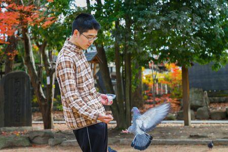 feeds: MATSUMOTO, JAPAN - NOVEMBER 21, 2015: Unidentified Japanese feeds pigeons on Yohashira shrines ground Editorial