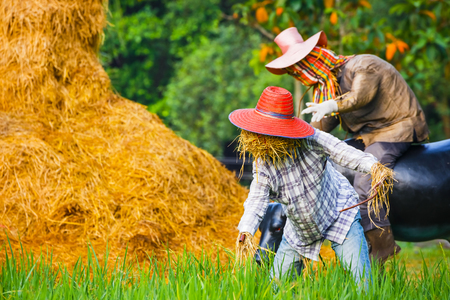 Scarecrow in a Thai Rice Field Stock Photo
