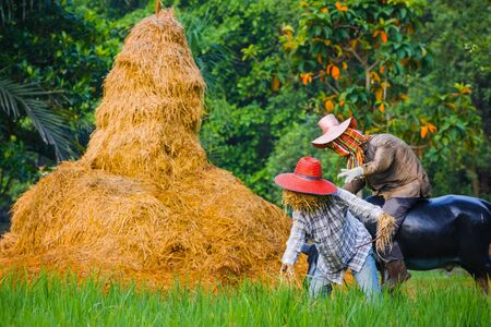 Scarecrow in a Thai Rice Field Editorial
