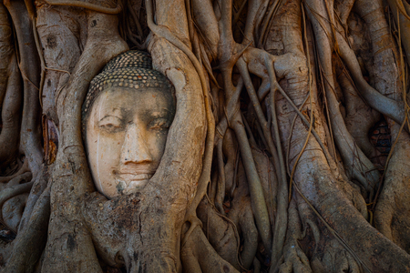 Famous Image  Buddha Head with Banyan Tree Root at Wat Mahathat Temple in Ayuthaya Historical Park, a UNESCO world heritage site, Thailand Stock Photo