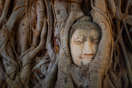 ayuthaya: Famous Buddha Head with Banyan Tree Root at Wat Mahathat Temple in Ayuthaya Historical Park, a UNESCO world heritage site, ThailandAYUTHAYA, THAILAND - NOVEMBER 4 2016: Wat Mahathat Temple in Ayuthaya Historical Park, a UNESCO world heritage site, Thailan Editorial