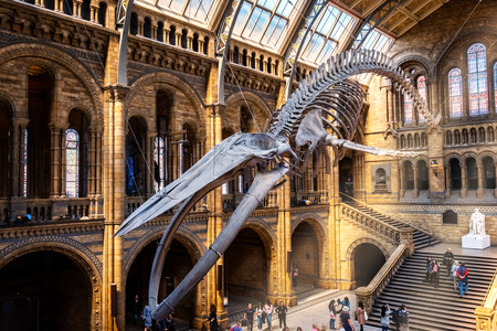 The Natural History Museum in London, UK.