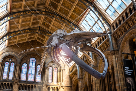 The Natural History Museum in London, UK.LONDON, UNITED KINGDOM - MAY 14 2018: The Natural History Museum houses a vast range of specimens of natural history, science specimens comprising 80 million items in 5 main collections