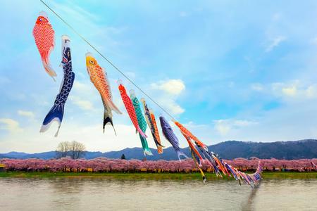 Koinobori carp-shaped windsocks over Kitakami river during fullbloom Cherry Blossom at Kintakami Tenshochi park in Iwate , Japan Stock Photo