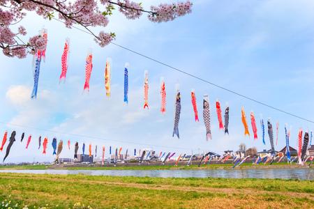 Koinobori carp-shaped windsocks over Kitakami river during fullbloom Cherry Blossom at Kintakami Tenshochi park Iwate , Japan - April 22 2018: Koinobori carp-shaped windsocks traditionally flown in Japan to celebrate Childrens Day over Kitakami river dur