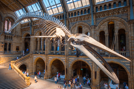 London, United Kingdom - May 20 2018: The Natural History Museum houses a vast range of specimens of natural history, science specimens comprising 80 million items in 5 main collections