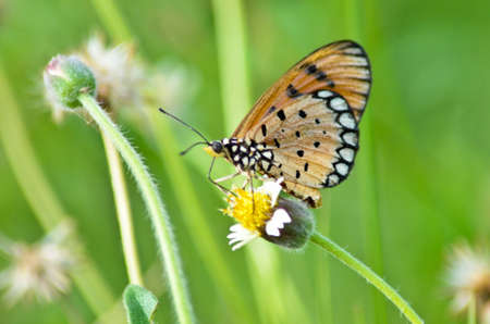 danaus: Beautiful butterfly perched on a flower Stock Photo