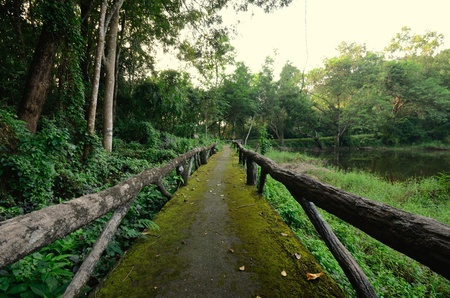 natural study trail in Thai national park Stock Photo