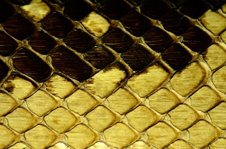 lozenge: snake skin with the pattern lozenge style Stock Photo