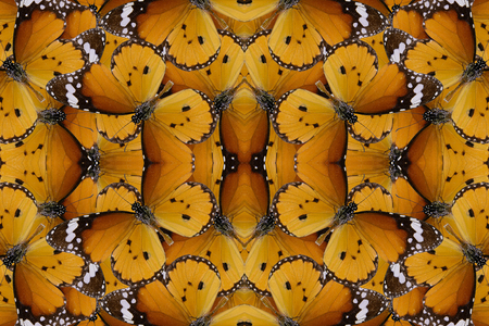 abstract eye: Beautiful multicolor pattern background texture made from Plain Tiger Butterfly (Danaus chrysippus)
