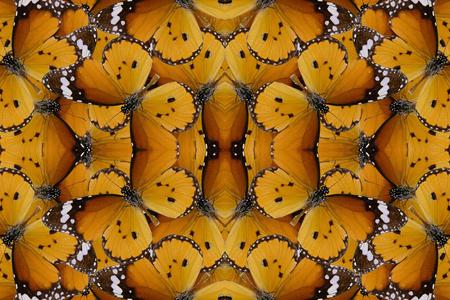 abstrakte muster: Sch�ne mehrfarbige Muster Hintergrundtextur von Plain Tiger Schmetterling gemacht (Danaus Monarch)
