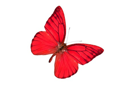 Beautiful Orange Albatross Butterfly (Appias nero) in process color isolated on white