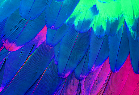 ara: beautiful Green-winged Macaw (Ara chloropterus) back feather Stock Photo