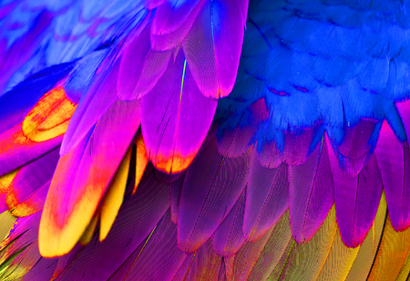ara: beautiful Green-winged Macaw Ara chloropterus back feather Stock Photo
