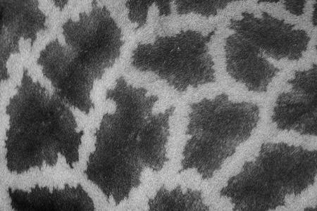 giraffa: beautiful Giraffe (Giraffa camelopardalis) skin for background use