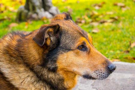 dog head profile Banque d'images
