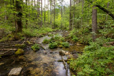 peaceful stream in Kamniška Bistrica valley