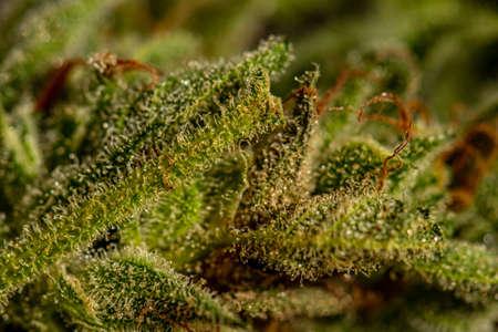 Crystals on cannabis leaf