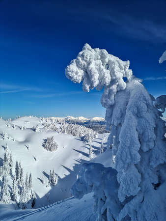 Trees covered with snow in the mountains, Slovenia
