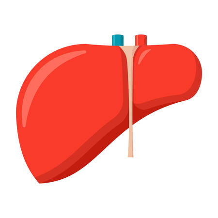 Hepatology concept with liver, vector illustration in flat style Illustration