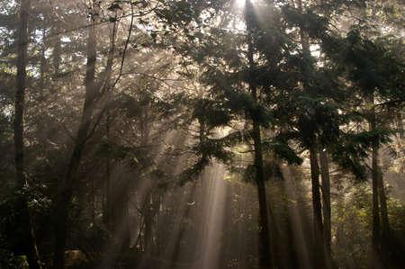 uplifting: rayos solares