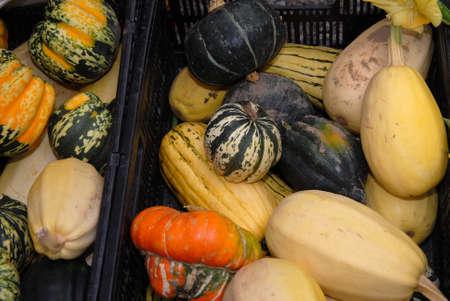 many varieties of squash in bins at market