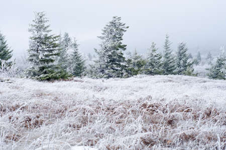 west virginia trees: Snow and ice covers a meadow at Dolly Sods Wilderness, West Virginia