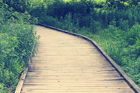 coloration: Wooden boardwalk in a forest, retro vintage coloration