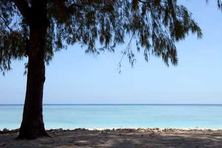 Tree on a wonderful tropical beach