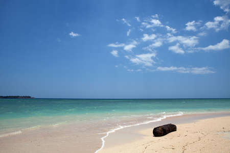 Single tree on a beach with turquoise water Stock Photo - 5679249
