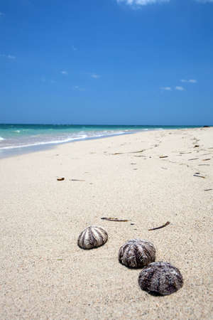 Three shells on a beach with turquoise water Stock Photo