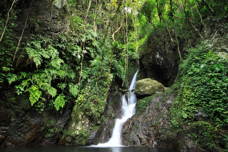 Hidden rain forest waterfall with lush foliage and mossy rocks Stock Photo - 10036610